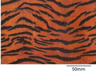 画像1: TIGER  (A4)