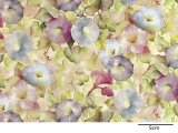 MORNING GLORY CHINTZ  (A4)