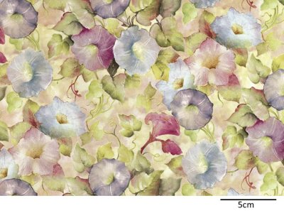 画像1: MORNING GLORY CHINTZ  (A4)