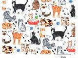 CATS (L)
