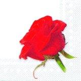 【ナプキン】 Valentine rose