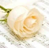【ナプキン】 Classic Rose