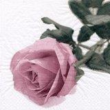 【ナプキン】 Rosa Nobile Vintage ros?