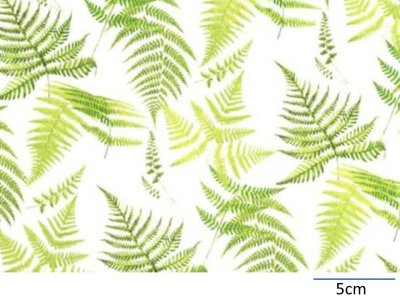 画像1: FERN CHINTZ WITH CLEAR  (A4)