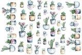 Succlulent Plants