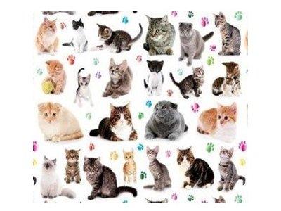 画像1: CATS