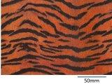 TIGER  (A4)