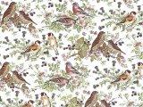 BIRD  CLEAR (A4)