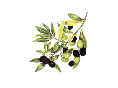 画像1: Olives