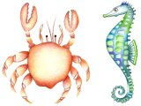 CRAB and SEAHORSE
